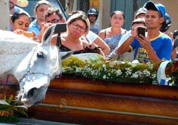 El caballo acercó su cabeza sobre el ataúd y relinchó insistentemente durante el recorrido de la procesión.