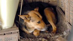En Alta Gracia descontarán impuestos para quienes adopten perros callejeros