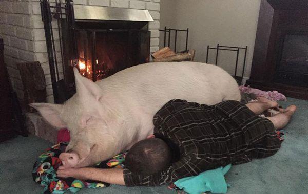 Tomar la siesta es un acto familiar, no importa si tu mascota pesa295 kilos