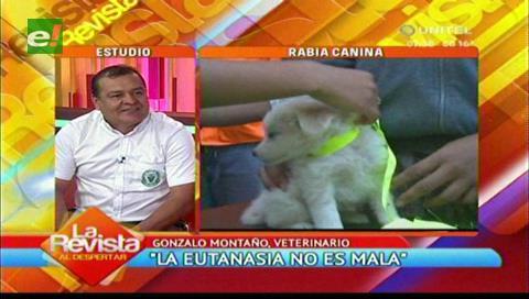 Veterinarios piden aplicar la eutanasia ante los casos de rabia canina