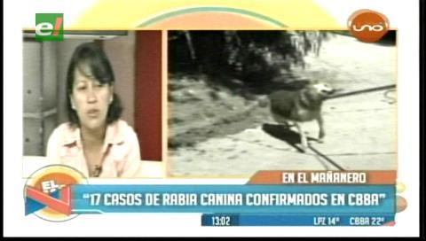 Reportan 17 casos de rabia canina en Cochabamba