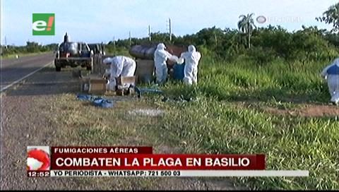 Fumigan el municipio de Basilio para evitar que la plaga de langostas avance