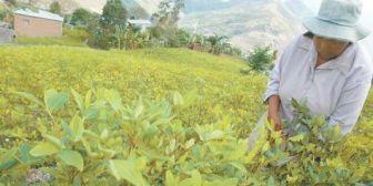 EEUU difiere de la UNODC y asegura que en Bolivia existen 36.500 ha de coca