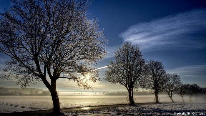Árboles en el Bajo Rín, entre Alemania y Holanda.