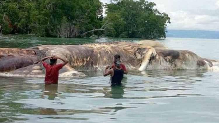 Finalmente, científicos de los Estados Unidos determinaron qué tipo de animal es el que apareció muerto en las costas de Indonesia