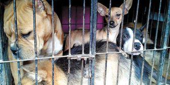 La Alcaldía de Santa Cruz impone veda a la venta de perros hasta controlar la epidemia de rabia canina