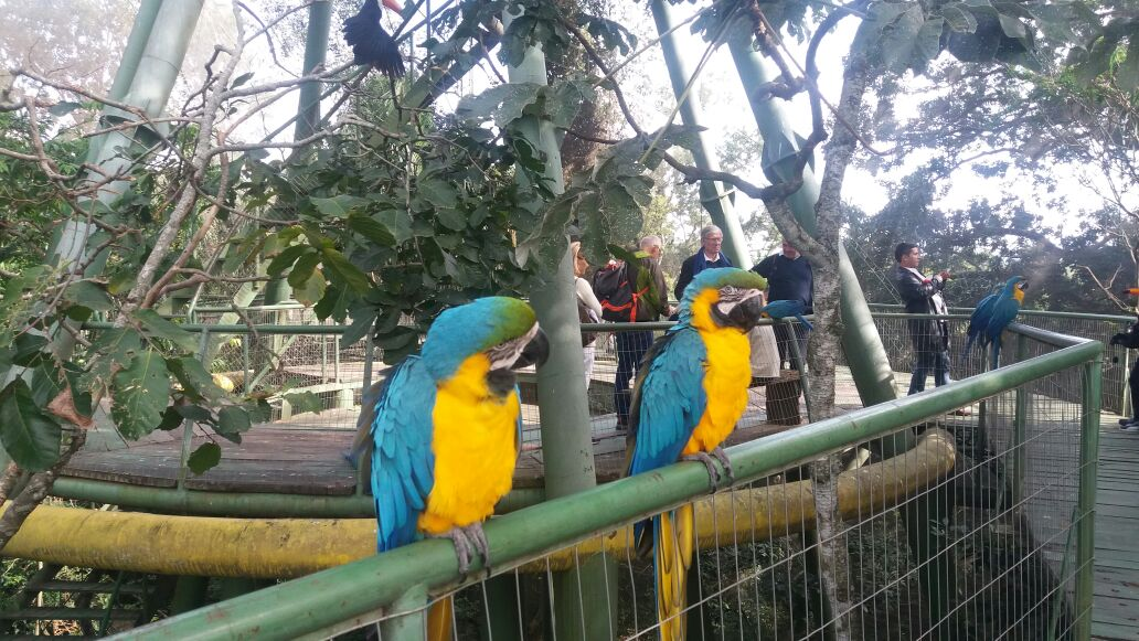 Parabas azules - Aviario