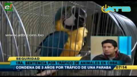 Se realiza primera sentencia por tráfico de animales silvestres