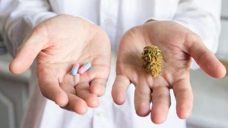 El debate sobre el uso del cannabis vuelve a abrirse (Shutterstock)