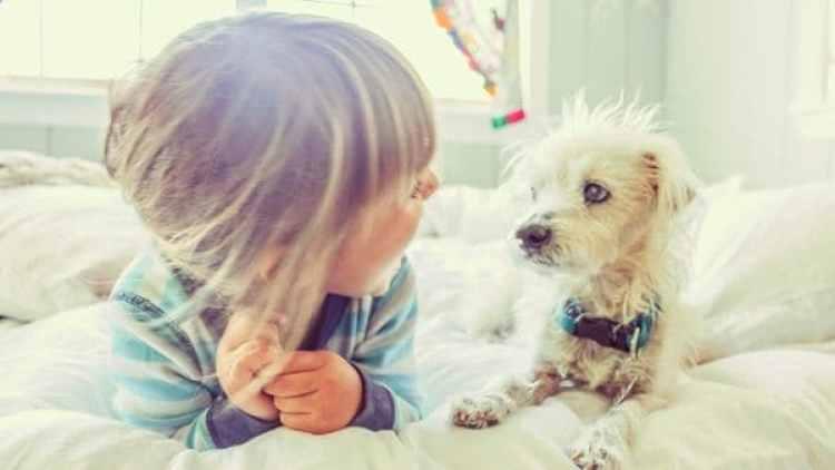 El estudio confirmó la capacidad canina de poder interpretar y comprender lo que los humanos les comunican (iStock)