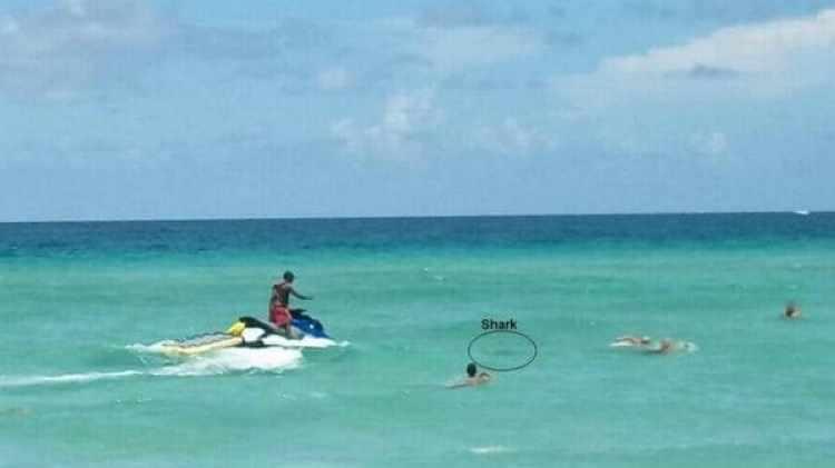 Un socorrista intenta ahuyentar al tiburón (Rob Boyte)