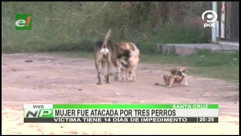Mujer fue atacada por tres perros en La Virgen Luján