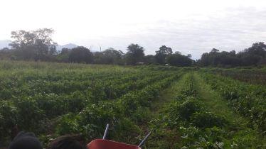 protección cultivos 2