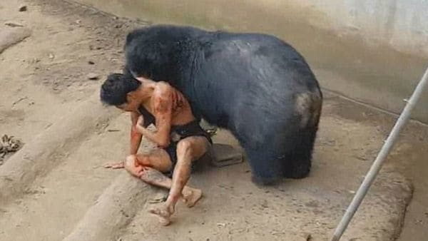 Oso hambriento trata de devorar a un hombre