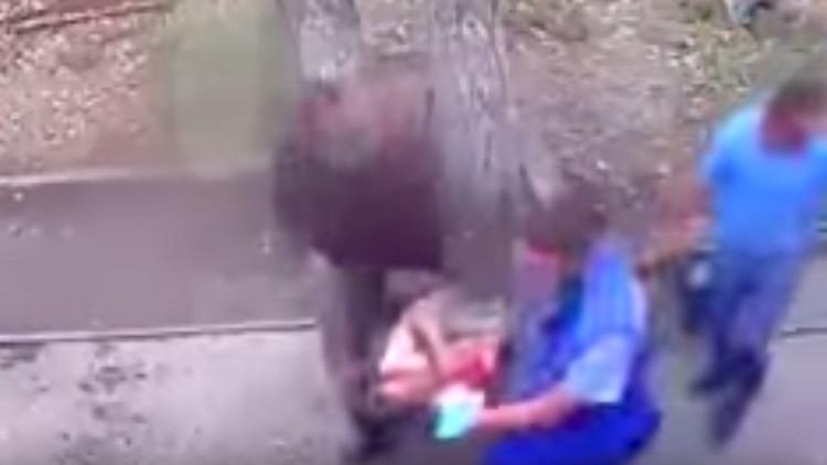 Ruso trata de alimentar a tres osos con leche condensada, pero querían carne (VIDEO)
