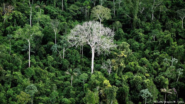 Brasilien Zerstörung der Amazonas Symbolbild (Getty Images/M. Tama)