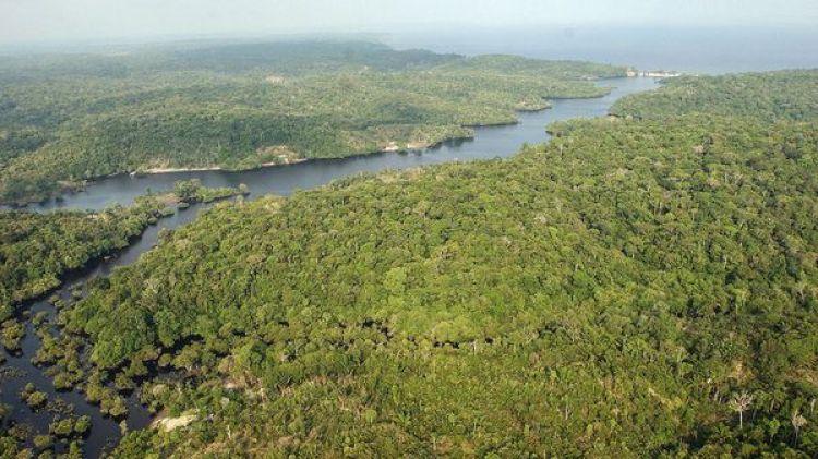 El miércoles WWF presentó un informe sobre el hallazgo de casi 400 especies desconocidas en la Amazonía, zona compartida por nueve países (EFE)