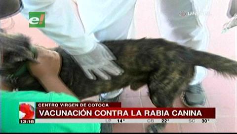 Vacunan a perros y gatos en zonas de riesgo