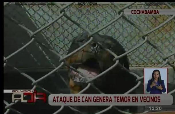 Perro raza rottweiler causa temor en vecinos de Cochabamba