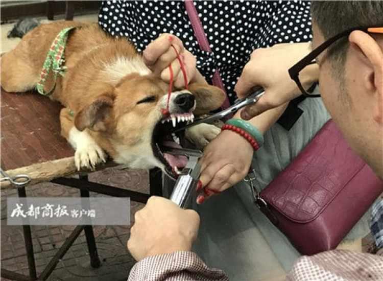 (Chengdu Business Daily)