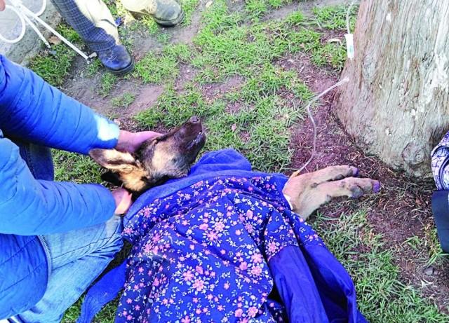 VOLUNTARIOS. El cachorro de la imagen lucha por su vida tras ser auxiliado.