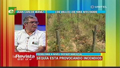 Declaran zona de desastre: Sequía afecta la producción en los Valles Cruceños
