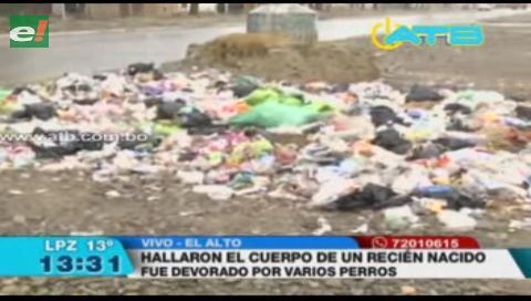 Hallan cadáver de bebé que era devorado por perros en El Alto