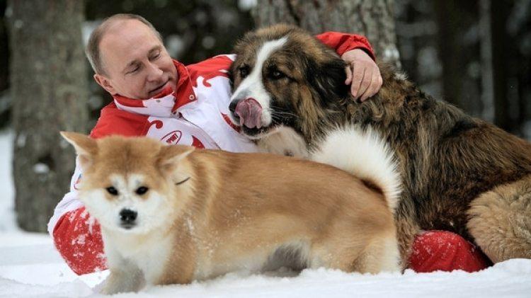 La imagen de marzo del 2013 muestra aVladimir Putin con sus perros Yume Buffy (Photo by: Sovfoto/UIG via Getty Images)