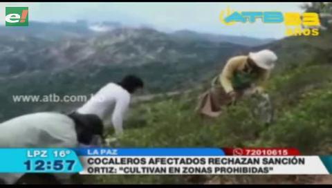 Cocaleros rechazan pena de 4 a 6 años por cultivos de coca en zonas no autorizadas