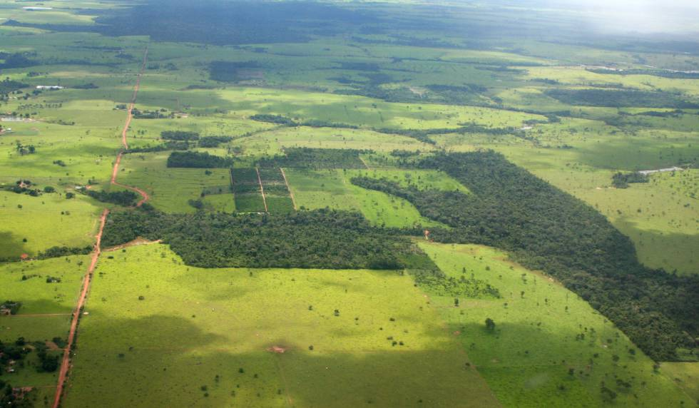 La selva amazónica, como este paisaje del Mato Grosso, presenta cada vez más calvas.
