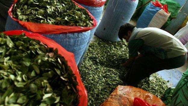Los productores de coca de Bolivia
