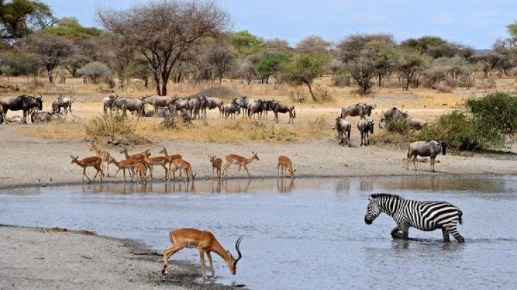 """Debe declararse como reservas naturales protegidas """"una significativa proporción del planeta"""", y erradicarse el tráfico de especies silvestres y la caza furtiva ilegal"""