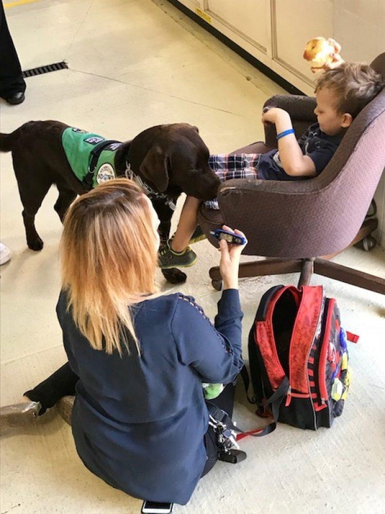 Slash, un perro labrador, es un perro capaz de detectar diabetes (The Washington Post / Lynh Bui)