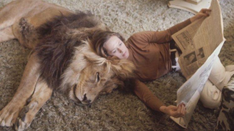 Tippi Hedren apoyada al león Neil en el living de su casa.