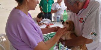 Campaña de vacunación a perros, está en marcha