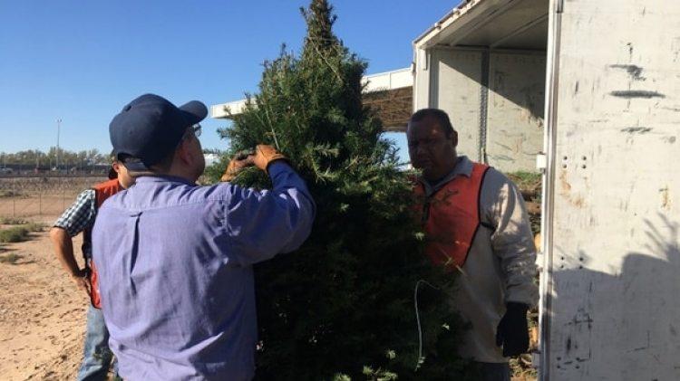 Se retornaron siete cargamentos de pinos en Mexicali, dos en Tijuana, así como tres cargamentos de Nogales y cinco en Nuevo Laredo (EFE)