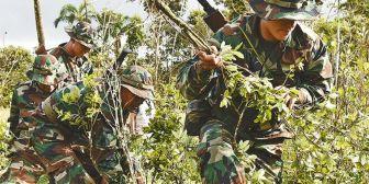Unodc alerta que cultivos y árboles mimetizan las plantaciones de coca