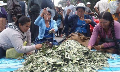Productores de hoja de coca en el Día Nacional del Acullico, en Cochabamba. Foto: Fernando Cartagena