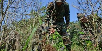 Arranca campaña de erradicación de coca ilegal en Bolivia