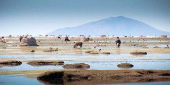 Lluvias revitalizan los lagos Poopó y Uru Uru de Oruro