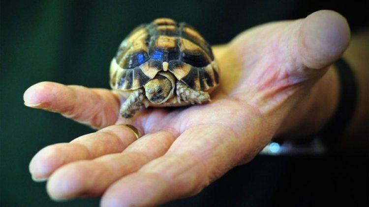 Los hallazgos epidemiológicos y de laboratorio vincularon este brote de infecciones humanas por Salmonella Agbeni con el contacto con las tortugas