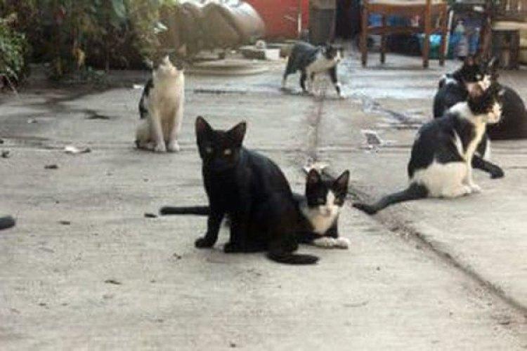 Algunos de los gatos de Antonio García (Jasmin Dulay/The Washington Post)