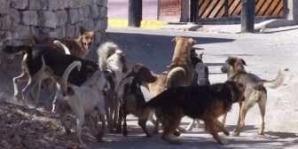 Reportan 18 casos de rabia animal en La Paz entre enero y marzo