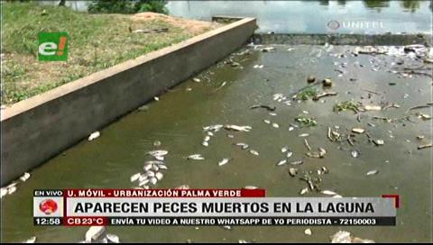 Reportan muerte masiva de peces en la laguna de Palma Verde