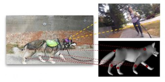 Una inteligencia artificial que imita el comportamiento de un perro
