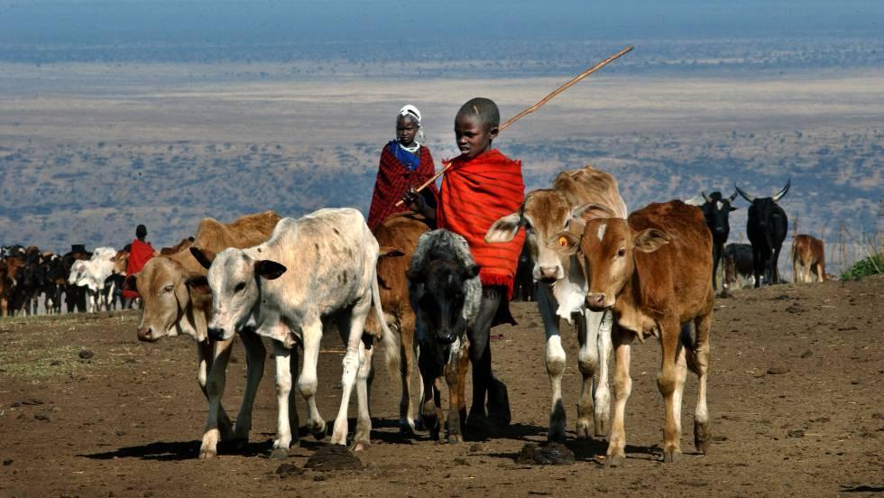 La vaca ¿el mamífero más grande de nuestro planeta — Predicción científica