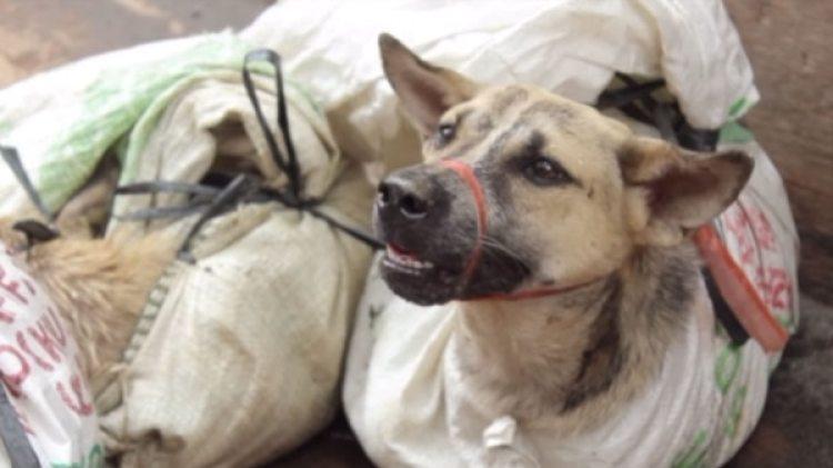 El porcentaje de gente que consume carne de perro en Indonesia es limitado, pero por la extensa población del país no deja de ser un mercado lucrativo