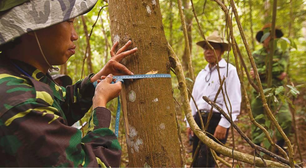 Investigadores del programa de evaluación nacional de los bosques de Vietnam miden el grosor de los árboles.