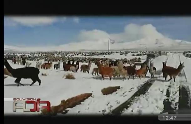 Diversas localidades afectadas por intensas nevadas