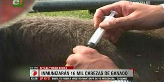 Santa Cruz: Inician vacunación contra la fiebre aftosa y Rabia bovina en el Chaco y Valles cruceños